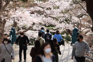 函館公園で満開の桜を撮影しよう!実際の写真から桜のきれいな撮影方法まで